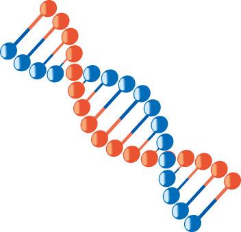 糖尿病は遺伝するかどうかを解説します