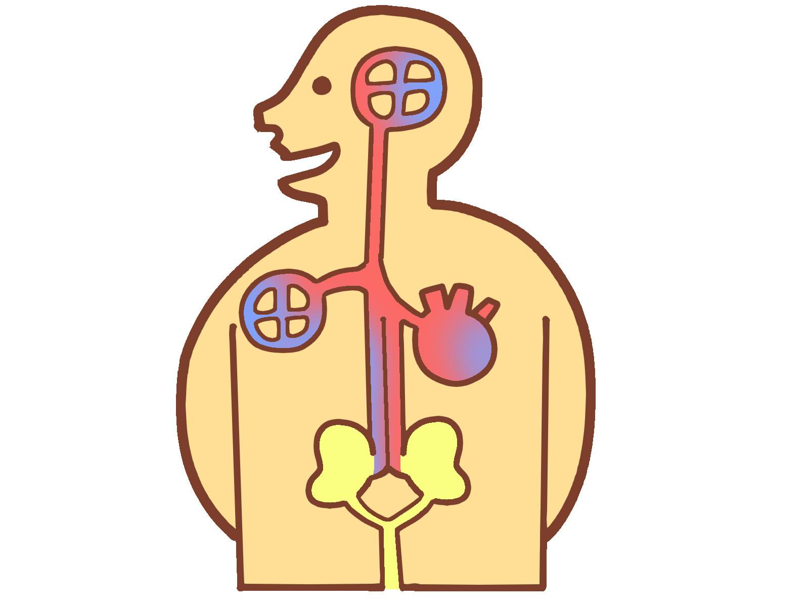 糖尿病が進行し、合併症により腎臓がなかり悪くなってきています